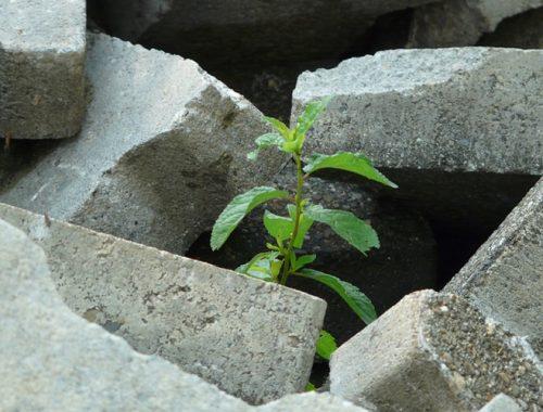Planta nascendo entre o concreto.