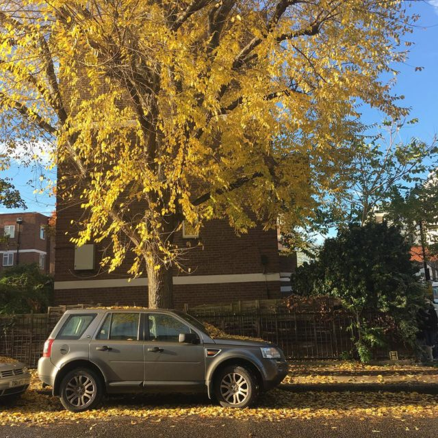 Outono continua espalhando beleza!