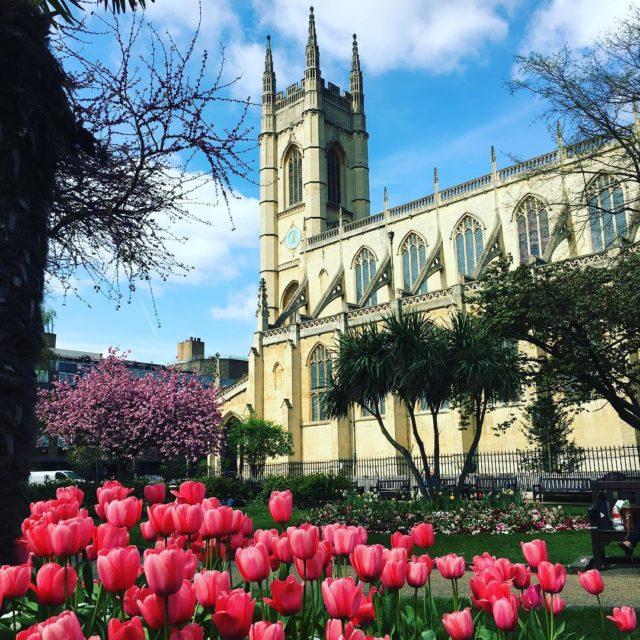 Entre tulipas histria e cerejeiras